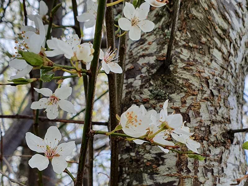 Blomster i tre